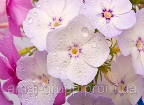 15 цветочных культур, которые нужно посеять на рассаду в марте