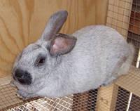 премикс для кроликов 3,5% откорм Германия gepardd.com