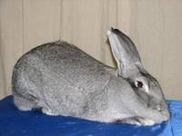 Шен Микс Раббит премикс для кроликов 3,5% откорм и кролематки