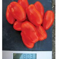 Семена томата Реактор F1, Clause (Франция), упаковка 5000 семян