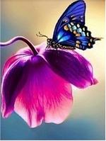Алмазная вышивка Бабочка на цветке KLN 20 х 26 см (арт. FS044)
