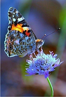 Алмазная вышивка Яркая бабочка на цветке KLN 20 х 26 см (арт. FS045)