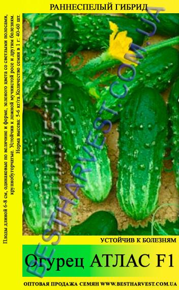 Семена огурца Атлас F1 0,5кг