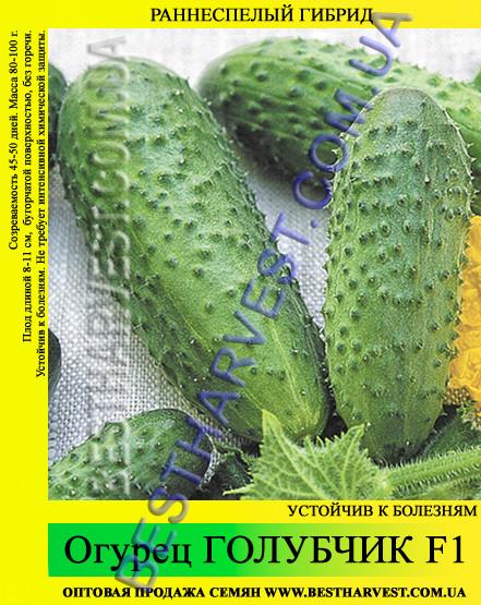 Семена огурца Голубчик F1 0,5 кг