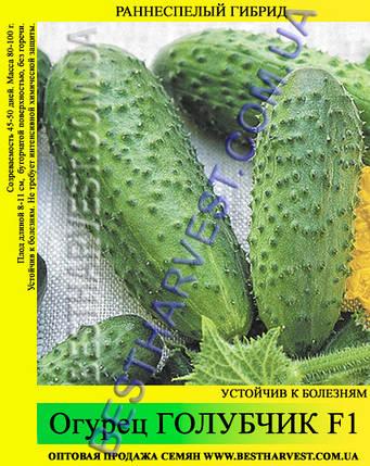 Семена огурца Голубчик F1 0,5 кг, фото 2