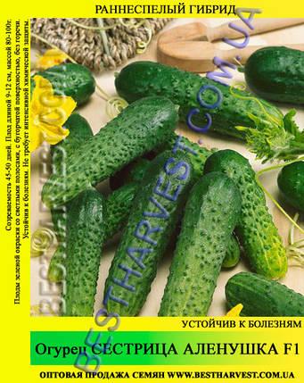 Семена огурца Сестрица Аленушка F1 5 кг (мешок), фото 2