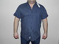 Рубашка мужская большой размер.