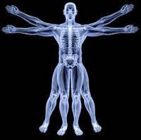 Анатомо-физиологическая модель человека. Оптимизация тела. Антропометрия и соматоскопия (очно и онлайн)