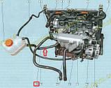 Патрубок шланг от расширительного бачка нижний к перепускной трубе (саксофону) Ланос Lanos FSO 96351748, фото 2