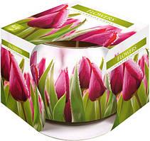 Свеча ароматическая в стекле Bispol Тюльпаны 7 см (sn71s-07)