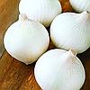 ВАЙТ ВИНГ F1  - семена лука репчатого белого, 250 000 семян, Bejo Zaden