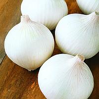 ВАЙТ ВИНГ F1  - семена лука репчатого белого, 250 000 семян, Bejo Zaden, фото 1