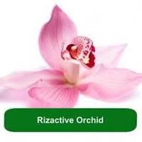 Rizactive Orchid - экстракт орхидеи в молочке, 10 мл/ 1 л