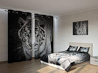 Фотокомплект  тигр бенгальский