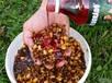 Сироп Haldorado Carp Syrup  500 мл  Черный кальмар, фото 4