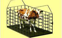 Весы для взвешивания животных (скота). Индзаказ