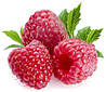 МАЛИНА КРАСНАЯ (RED RASPBERRY Rubus Idaeus)