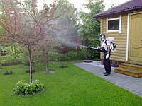 Обприскування плодових дерев від шкідників