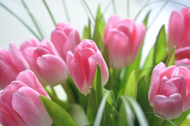 C праздником весны !