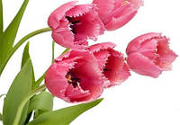 Вітаємо з 8 березня!!!