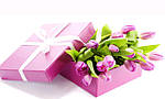 Милых дам поздравляем с женским праздником 8 марта