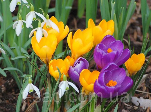 C праздником  8-е марта