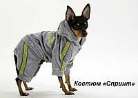 """Велюровый костюм """"Спринт""""  для собак, размеры XS, XS-2, S"""