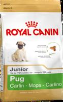 Корм для щенков - мопсов до 10 месяцев  Роял Канин Pug Junior 0,5кг