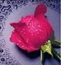 Набор алмазной вышивки Розовая роза 22 х 22 см (арт. PR062) частичная выкладка, фото 1