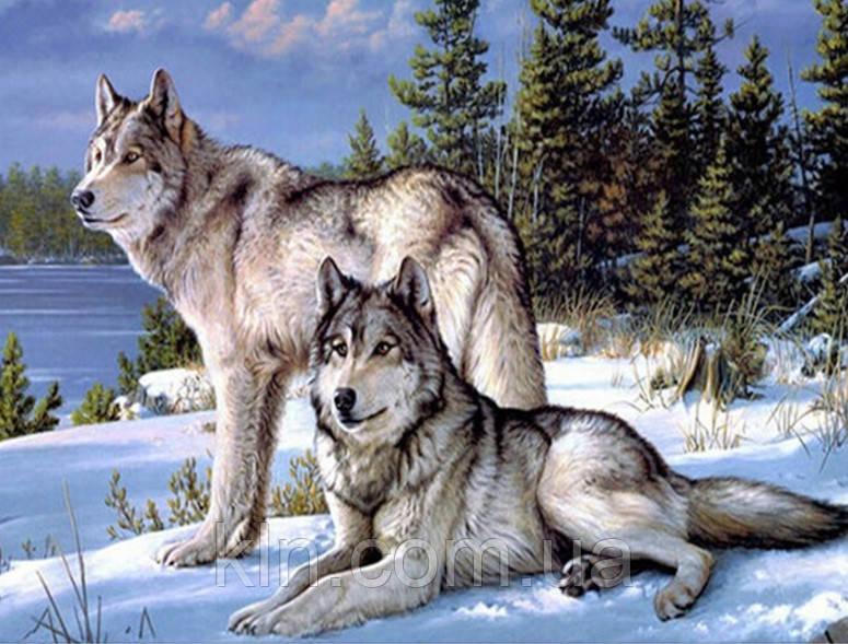 Алмазная вышивка на подрамнике Семейство волков 50 х 40 см (арт. TN558)