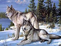 Алмазная мозаика (на подрамнике) Волк и волчица 50 х 40 см (арт. TN558) на подарок