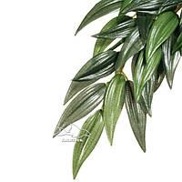 Растение иглица средняя ExoTerra Rucus (medium) (Hagen РТ 3041)