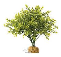 Растение для террариума самшит ExoTerra Boxwood Bush (Hagen РТ 2994)