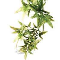 Растение для террариума кротон малый ExoTerra Croton small (Hagen РТ 3000)