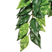 Растение фикус средний ExoTerra Ficus (medium) (Hagen РТ 3040)