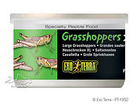 Корм для рептилий ExoTerra Grasshoppers XL (Hagen РТ 1952)