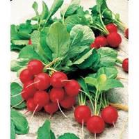Семена раннего редиса Джолли, Clause (Франция), 100 гр.