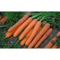 Семена ранней моркови Сатурно F1, Clause (Франция), упаковка 100 000 семян