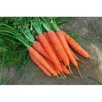 Семена моркови Матч F1, Clause (Франция), упаковка 100 000 семян