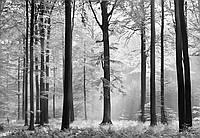 Фотообои бумажные на стену 366х254 см 8 листов: природа, Авалон