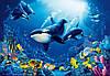 Фотообои бумажные на стену 366х254 см 8 листов: Водный мир