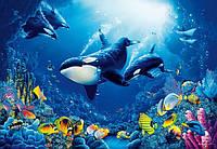 Фотообои 3D бумажные на стену 366х254 см 8 листов: Водный мир №118