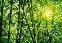 Фотообои бумажные на стену 366х254 см 8 листов:природа Бамбуковый лес  №123
