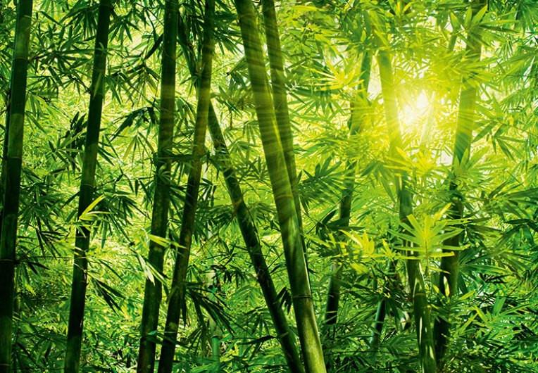 """Фотообои бумажные на стену 366х254 см 8 листов:природа Бамбуковый лес  - Магазин фотообоев """"Постерикс"""" в Ужгороде"""