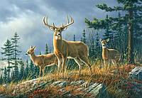 Фотообои бумажные на стену 366х254 см 8 листов: Три оленя
