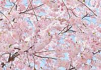 Фотообои бумажные на стену 366х254 см 8 листов: Розовые цветы сакуры №155