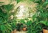 Фотообои бумажные на стену 366х254 см 8 листов: Вид из окна Зимний сад