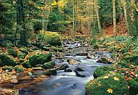 Фотообои бумажные на стену 366х254 см 8 листов: природа, Ручей в лесу №278