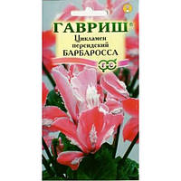 Семена Цикламен персидский Барбаросса 3 сем  Гавриш