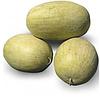 KS 9944 F1 - семена арбуза тип Чарльстон Грей, 1 000 семян, Kitano Seeds